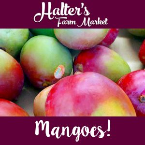 salem-county-mangoes