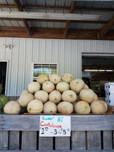 new jersey cantaloupes salem county farm market