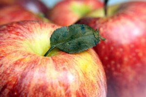 apple season in Salem County NJ
