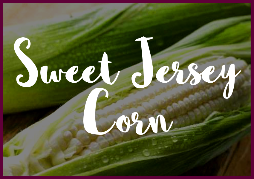 sweet jersey corn